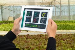 Robot astuto 4 di industria di Iot 0 concetti dell'agricoltura, l'agronomo industriale, agricoltore che per mezzo della compressa Fotografia Stock Libera da Diritti