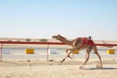 Robot camel racing Royalty Free Stock Image