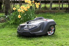 A remote controlled husavarna lawn mower. A robot controlled husavarna lawn mower cutting the green grass lawn with daffodils on the lawn royalty free stock photography