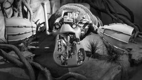 Robot del ornitorrinco Fotos de archivo libres de regalías