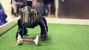 Robot dog walks on site stock video footage