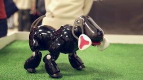 Robot dog walks on site stock footage