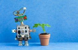 Robot and flowerpot. Creative design robotic character with green plant housepot . Blue background, copy space. Robot and flowerpot. Creative design robotic stock photos