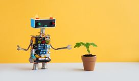 Robot and flowerpot. Creative design robotic character looks at the green plant housepot . Yellow wall background, copy. Space stock photography