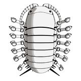 Robot Pillpug Top View Robotics. Robot Pillbug Angle View Black and White Robotics concept idea Stock Images