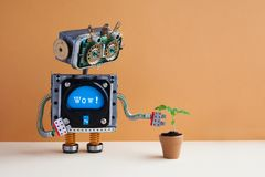 Robot and plant in a clay flower pot. Surprised robotic character with message wow looks at the green leaves houseplant. Brown wall background, copy space royalty free stock photo