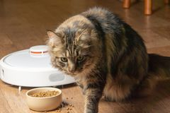 Robot vacuum cleaner after cat lunch. Close-up stock photo
