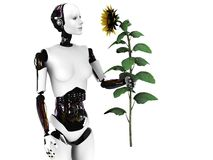 Robot woman holding a sunflower. Stock Photos