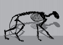 Robotic cat skeleton Stock Photography