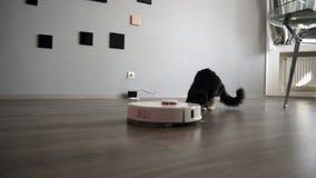 Robotic dammsugare och förskräckt husdjur Smart teknologi i ett modernt hus lager videofilmer