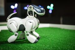 Free Robotic Dog AIBO Stock Photo - 162054880