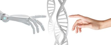 Robotic and human hand touches DNA chain. Robotic hand touches dna chain isolated on white background. Futuristic concept. 3d rendering stock photo