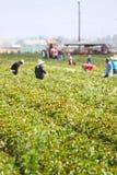 Robotnicy rolni obrazy stock