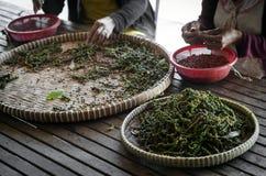 Robotnicy rolni sortuje świeżych pieprzowych peppercorns w kampot Cambodia zdjęcie royalty free