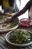 Robotnicy rolni sortuje świeżych pieprzowych peppercorns w kampot Cambodia obrazy stock