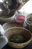 Robotnicy rolni sortuje ?wie?ych pieprzowych peppercorns w kampot Cambodia fotografia royalty free