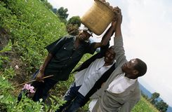 Robotnicy rolni, Uganda obrazy stock