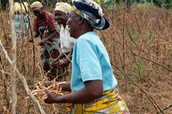 Robotnicy rolni, Uganda obraz royalty free
