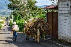 Robotnicy rolni z koński pogrążonym z kukurydzą, Gwatemala obrazy royalty free
