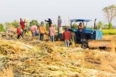Robotnicy rolni zbiera sugarbeet zdjęcia stock