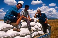 Robotnik rolny w Kosowo. Fotografia Stock
