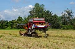 Robotnik rolny zbiera ryż z ciągnikiem Obrazy Stock
