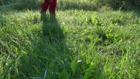 Robotnika rolnego odprowadzenie na zroszonego lata łąkowej trawie zbiory wideo