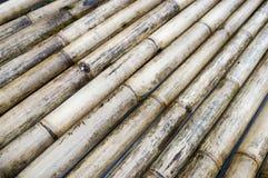 Robust bambuträ, en flotte som göras av, bakgrund royaltyfri bild