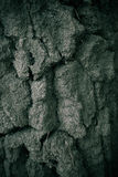 Robust trädtextur Royaltyfri Bild