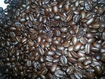 Robusta, σιτάρια, καφές, φασόλια, arabica, Αφρική, πρωί, φως, Στοκ φωτογραφίες με δικαίωμα ελεύθερης χρήσης