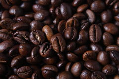 Free Robusta Coffee Beans Royalty Free Stock Photo - 34437615