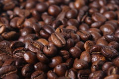 Free Robusta Coffee Beans Royalty Free Stock Image - 34437756