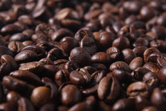 Robusta Coffee Beans Royalty Free Stock Photos