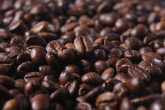 Robusta Coffee Beans Royalty Free Stock Photo