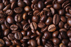 Robusta Coffee Beans Stock Image