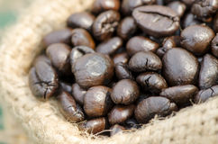 Robusta coffee. Stock Images