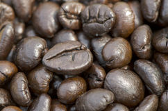 Robusta coffee. Stock Photo