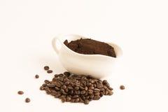 Robusta kawa (Coffea kanefora Pierre ex A Froehner ) Obraz Royalty Free