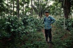 Robustakaffeeplantage mit seinem stolzen Inhaber lizenzfreies stockbild