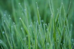 Rocía en hierba Imágenes de archivo libres de regalías