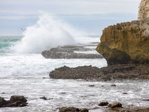Rocíe de una onda de fractura, y de una gaviota Imagen de archivo libre de regalías