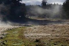 Rocíe los campos y la niebla cubiertos en el sol brillante de la mañana foto de archivo