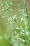 Rocío de la hierba verde Imagenes de archivo