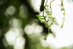 Rocío de la mañana Fotos de archivo