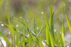 Rocío de la mañana en hierba fotografía de archivo