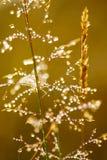 Rocío de la mañana en hierba Fotos de archivo libres de regalías