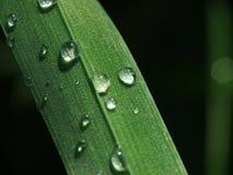 Rocío de la mañana en la hierba imagen de archivo libre de regalías