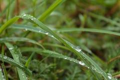 Rocío de la mañana en la hierba verde en las montañas cárpatas Fotos de archivo libres de regalías