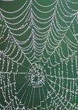 Rocío de la mañana en un spiderweb Foto de archivo