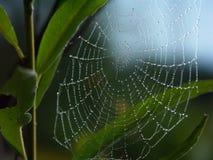 Rocío de la mañana en un Web de araña Foto de archivo libre de regalías